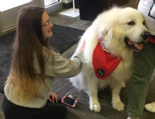 Therapy dog eases stress during finals